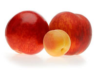 Apricot producer and sender